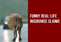 Funny Real Life Insurance Claims